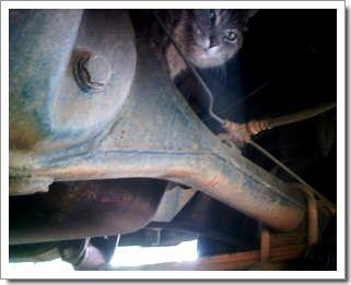 Une webcam sur un chat : voyage 1