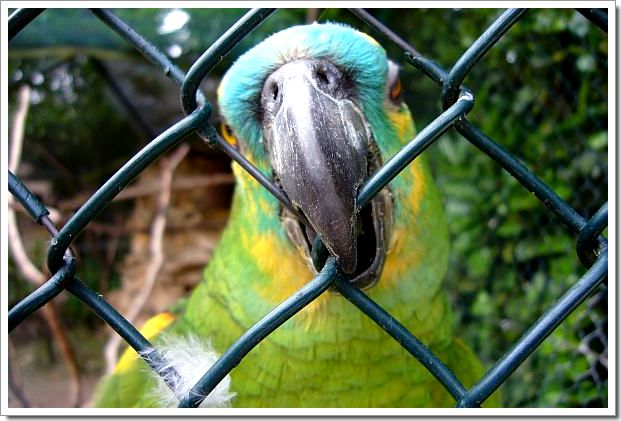 Zoo d'Amnéville : un perroquet