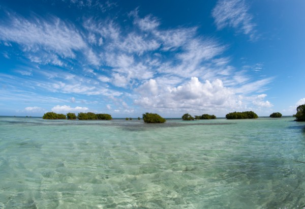 Mangrove, Guadeloupe